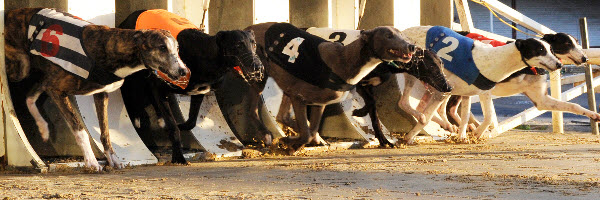 bh-greyhounds