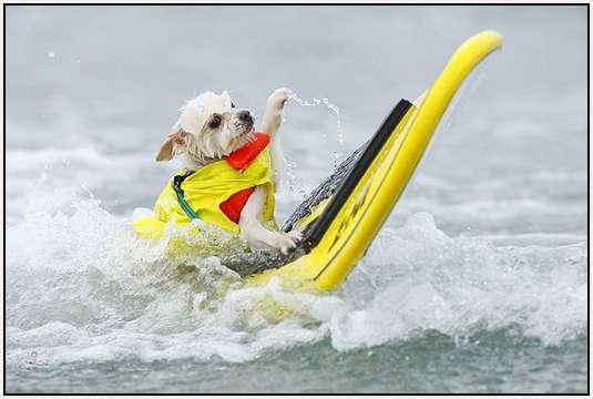 BH dog surfboard