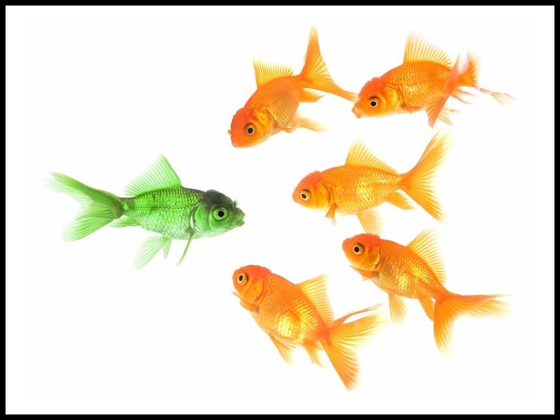 BH Green Goldfish