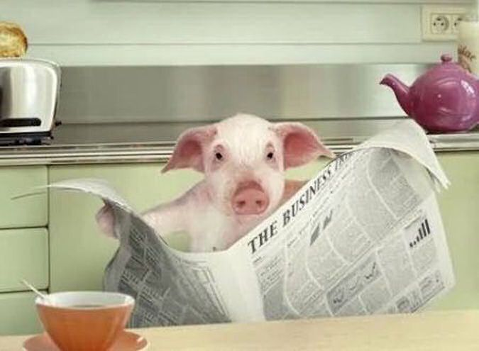 BH pig reading