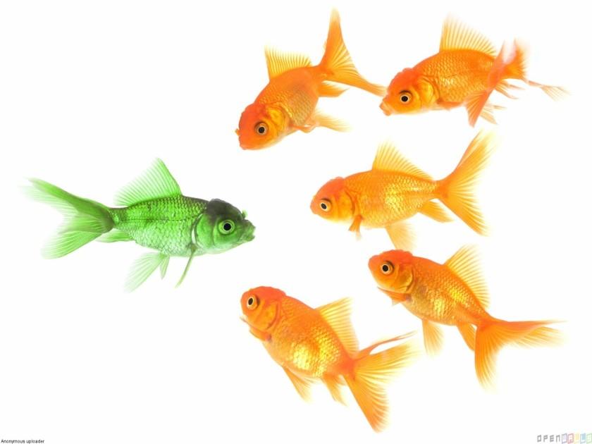BH green_goldfish_1600x1200