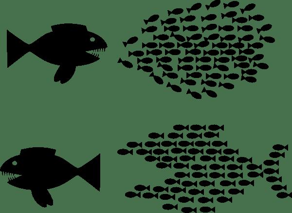 BH organise-fish-solidarity-hi