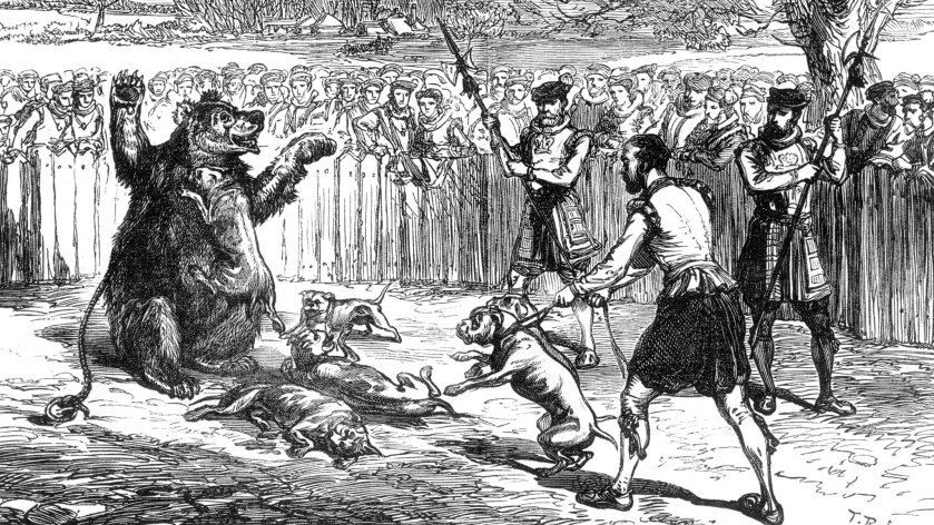 Illustration; Bear Baiting with dogs in the 16th century