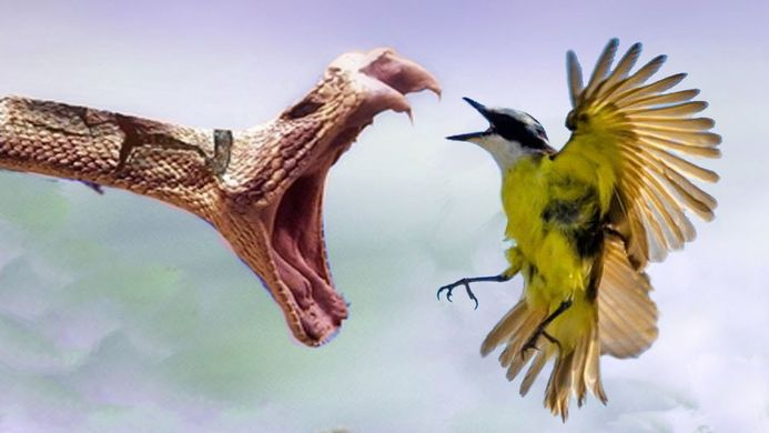 bird fights snake