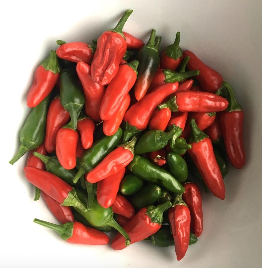 20190922 chilli harvest.jpg